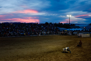 A cowboy competes in tie down roping during the final night of the Northwest Montana Fair Rodeo at the Flathead County Fairgrounds.